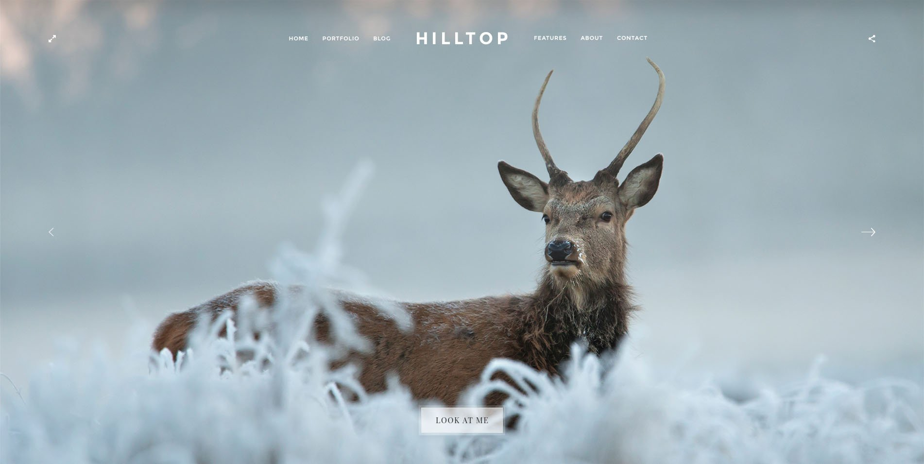 Hilltop 8